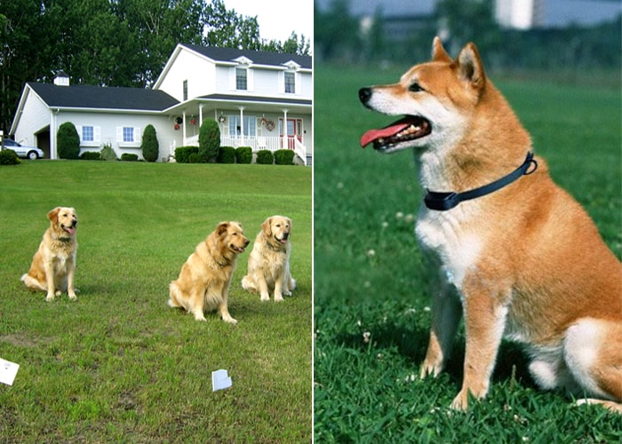 Electronic Pet Dog Fencing System (300 Meters) - 6