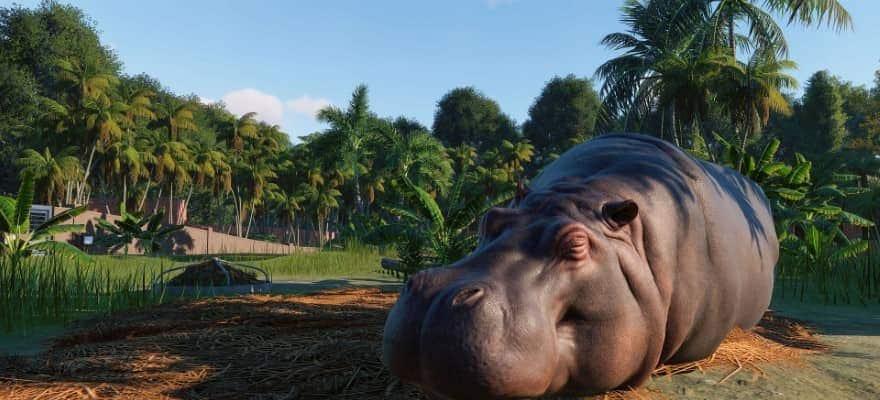 Hippopotamus in Planet Zoo